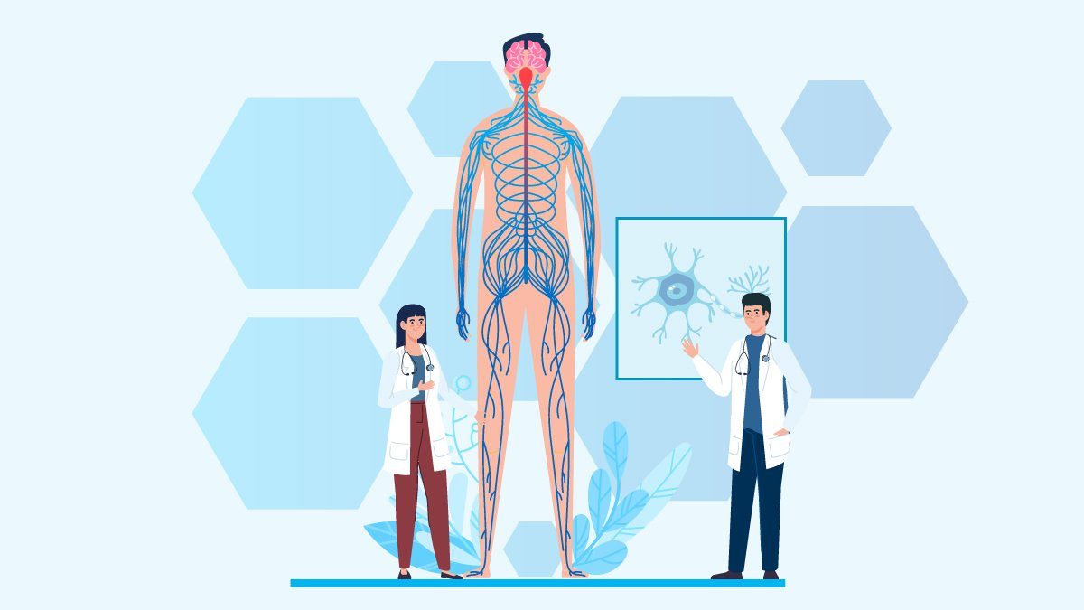 Huge Body Anatomy Standing while Two Doctors Talking About Multiple Sclerosis