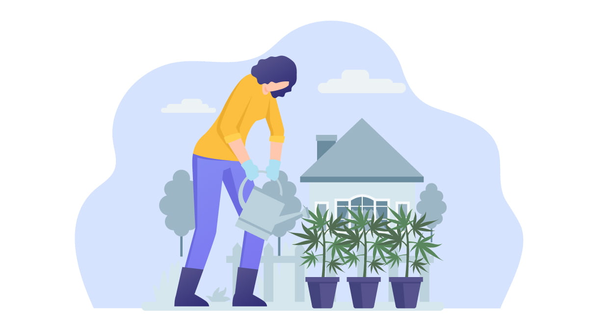 Woman Watering Hemp Planted on Pot at Home