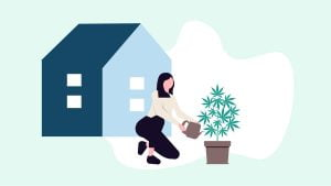 Illustration of a woman making her own CBD oil from a hemp plant