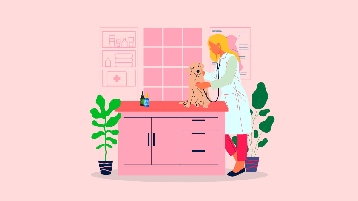 veterinarian checking on a dog in her clinic with CBD Oil