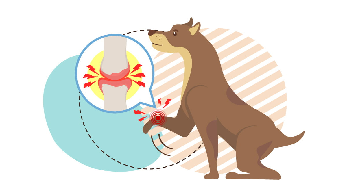 Illustration of a Brown Dog With Arthritis on his Knee