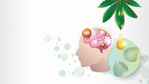 Illustration of how CBD Works in the Brain