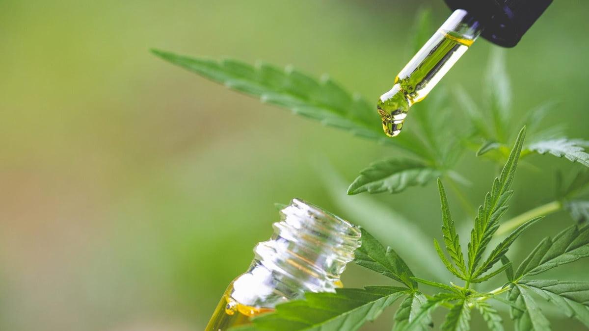 CBD Oil Bottle and Dropper Beside Hemp Leaves