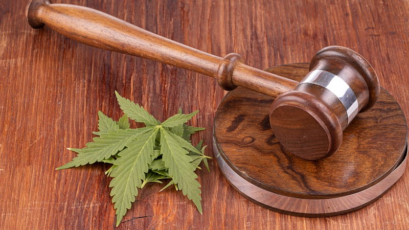 a wooden gavel and cannabis leaves on a wooden table