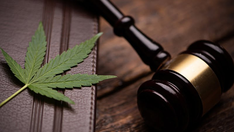cannabis leaf on top of a notebook and a gavel