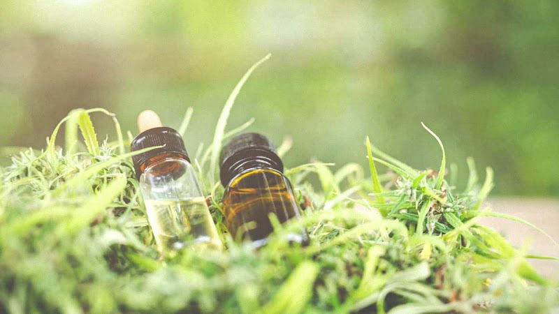 bottles of CBD oil extracts with hemp leaves around
