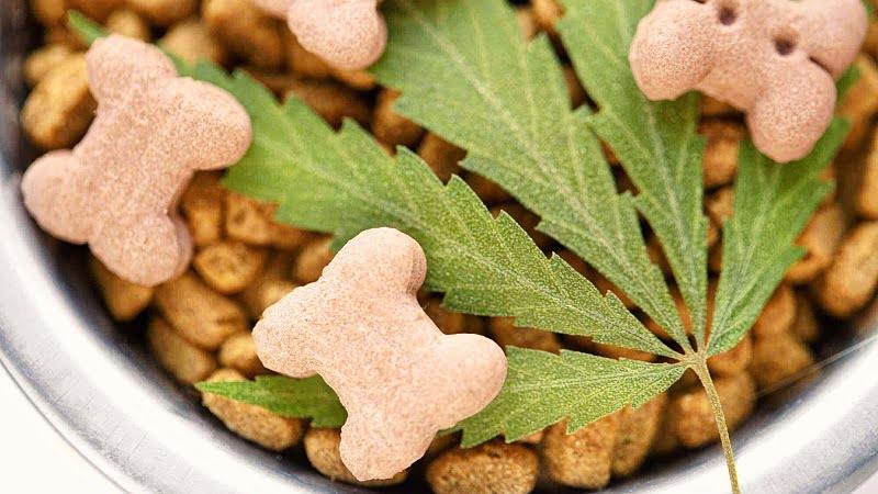 CBD Dog Treats in a bowl with a hemp leaf on top