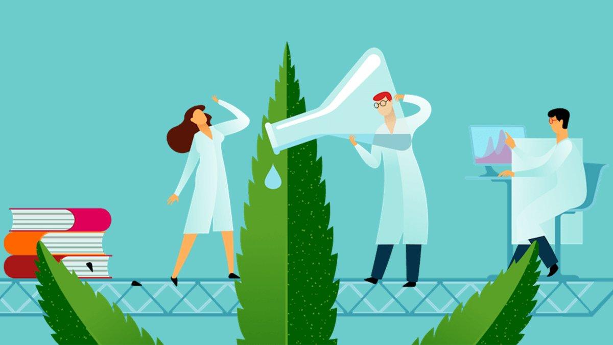 Illustration of scientists and hemp leaf