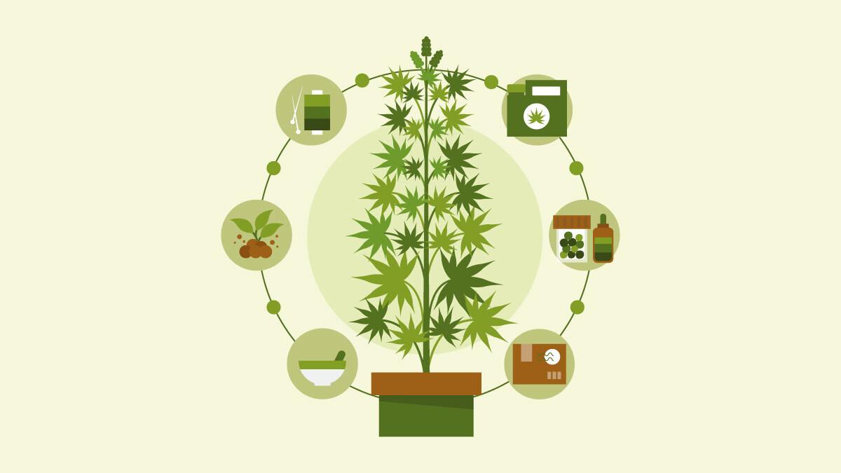 illustration of a hemp plant and hemp products