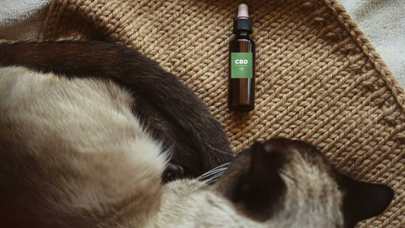 CBD Oil On the Floor Beside a Cat with Seizures