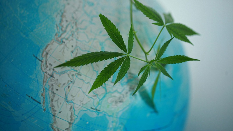 close up image of a glove focusing on United States with hemp leaves on top of it