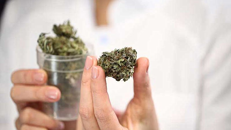 woman holding a container with hemp buds on right hand and a single bud on left hand