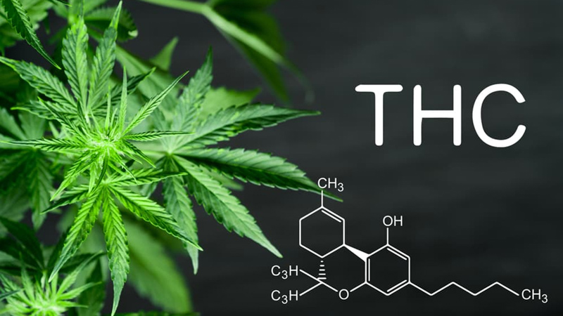 THC Chemical Structure with Hemp Leaves